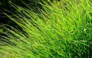 Gaia Principle would mix grass species