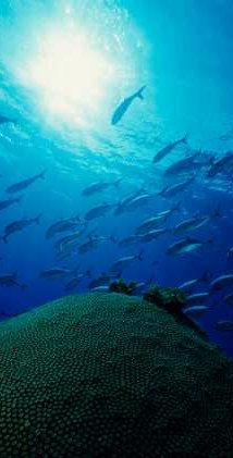 Life-giving and recycling ocean depths - iStockPhoto
