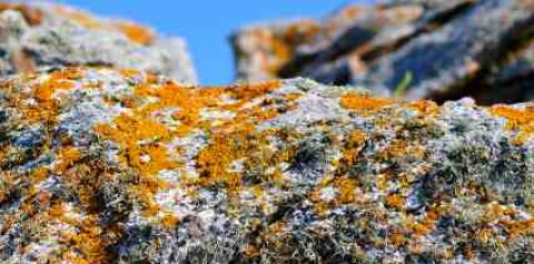 Action of lichen breaking down solid rock - iStockPhoto