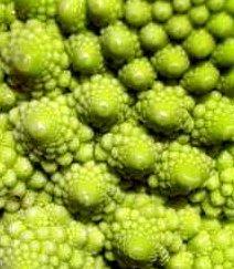 Romanesco cauliflower showing fractal patterns of mandelbrot design -iStockPhoto