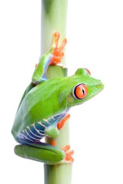 Recent News On Global Warming And Effects on Frogs - iStockPhoto