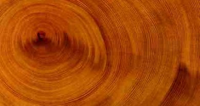 Climategate Was Partly About Tree Growth Ring Data - iStockPhoto