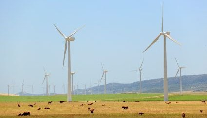 Cows grazing on farm under Wind Turbines - iStockPhoto