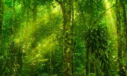 Artificial Photosynthesis as naturally occurs in rain forests - iStockPhoto