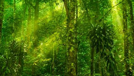 Tropical Rainforest Diversity - iStockPhoto