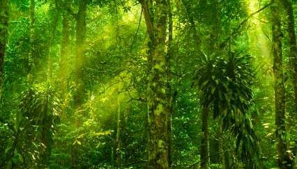 Tropical Rainforest Diversity - iStockPhoto
