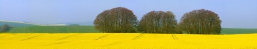 Biofuel From Agricultural Crops - iStockPhoto