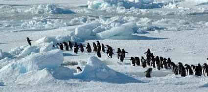 Antarctic landscape and life with penguins - iStockPhoto