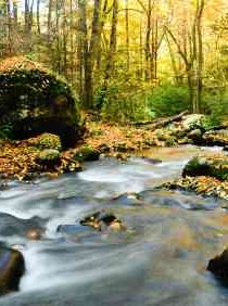 Forest stream carrying broken rock surface - iStockPhoto