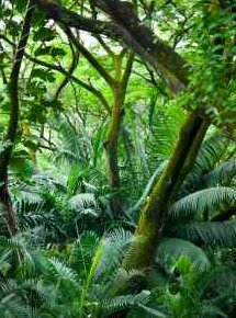 Tropical rainforest fixing carbon via photosynthesis - iStockPhoto